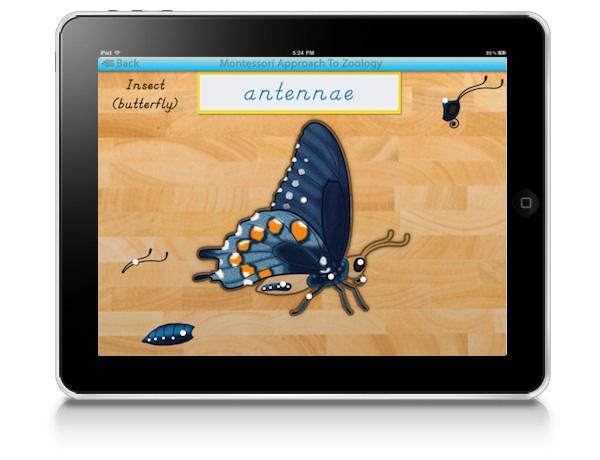 montessori-approach-to-zoology-parts-of-animals-invertebrates